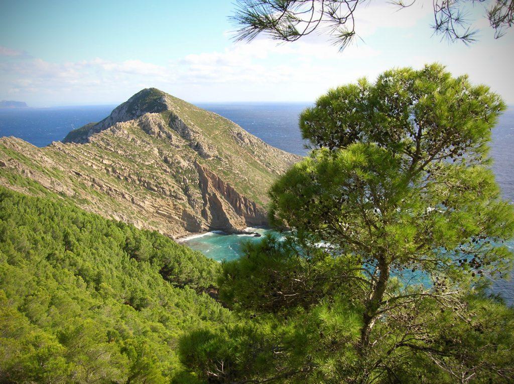 Punta Basano