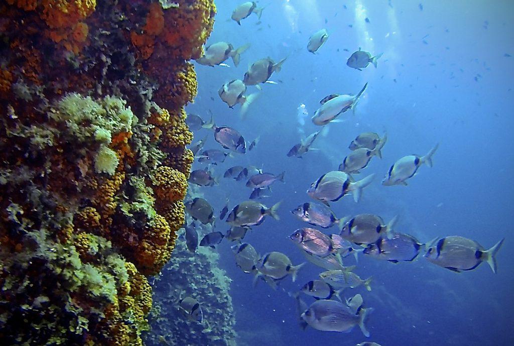Flora e fauna marina